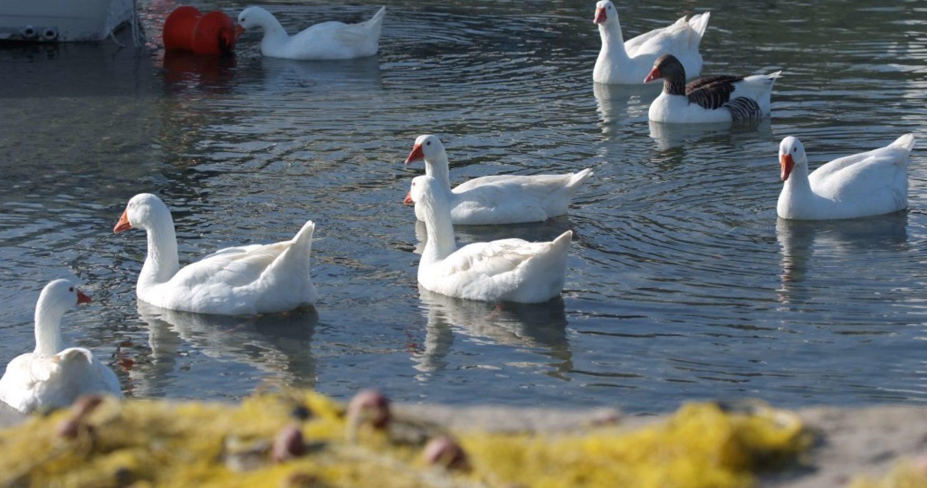 Naoussa-Paros-Asteras-Paradise-Ducks-1024x685